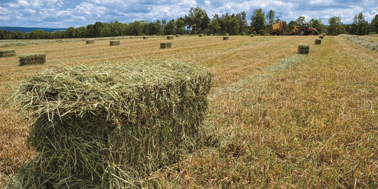 hay-bales-in-field-after-bailing-qb Jubilant Stewards