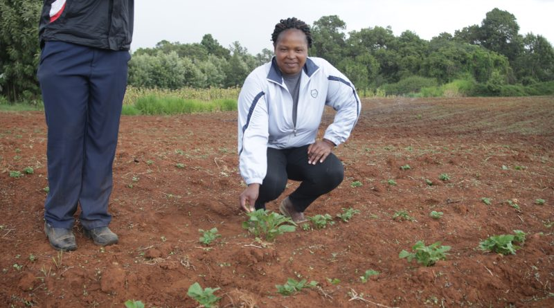 Fridah Wachira a farmer in Meru in her farm when she was visited by the TingA team