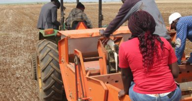 TingA potato planter planting Potatoes in Timau Meru