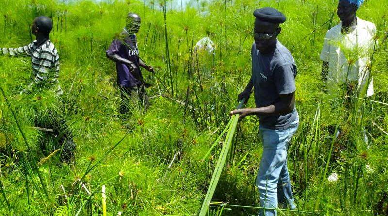 yala swamp Jubilant stewards